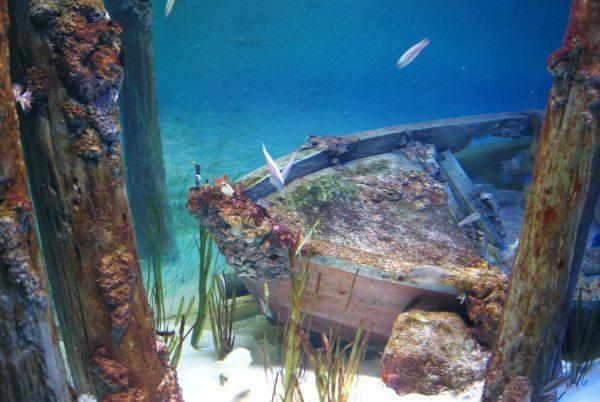 Подводный мир Андаманского моря