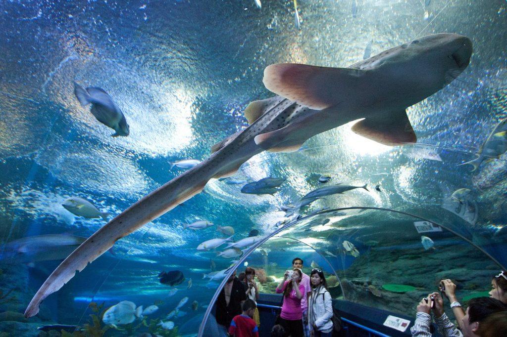 Протяни руку и дотронься до обыкновенного чуда в Underwater World в Паттайи