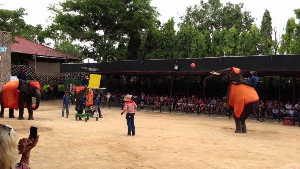 шоу с слонами в Нонг нуч